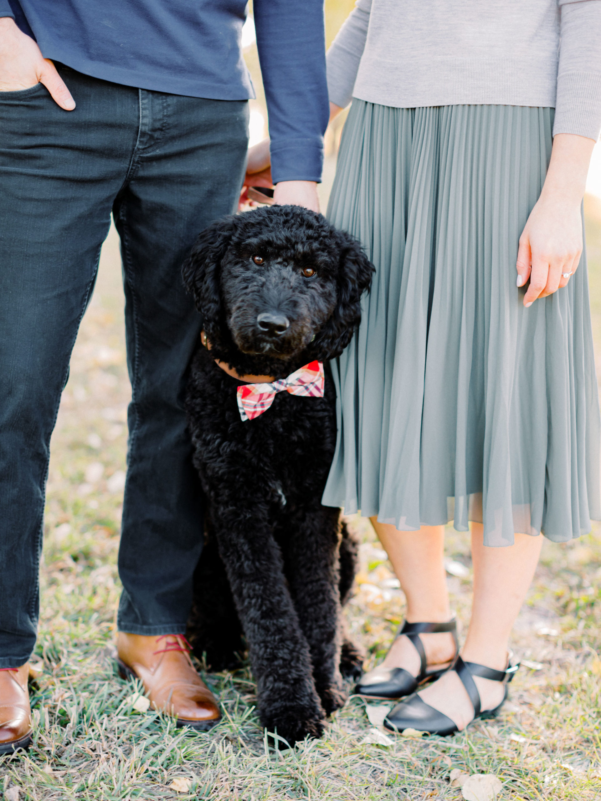 cute dogs in engagement