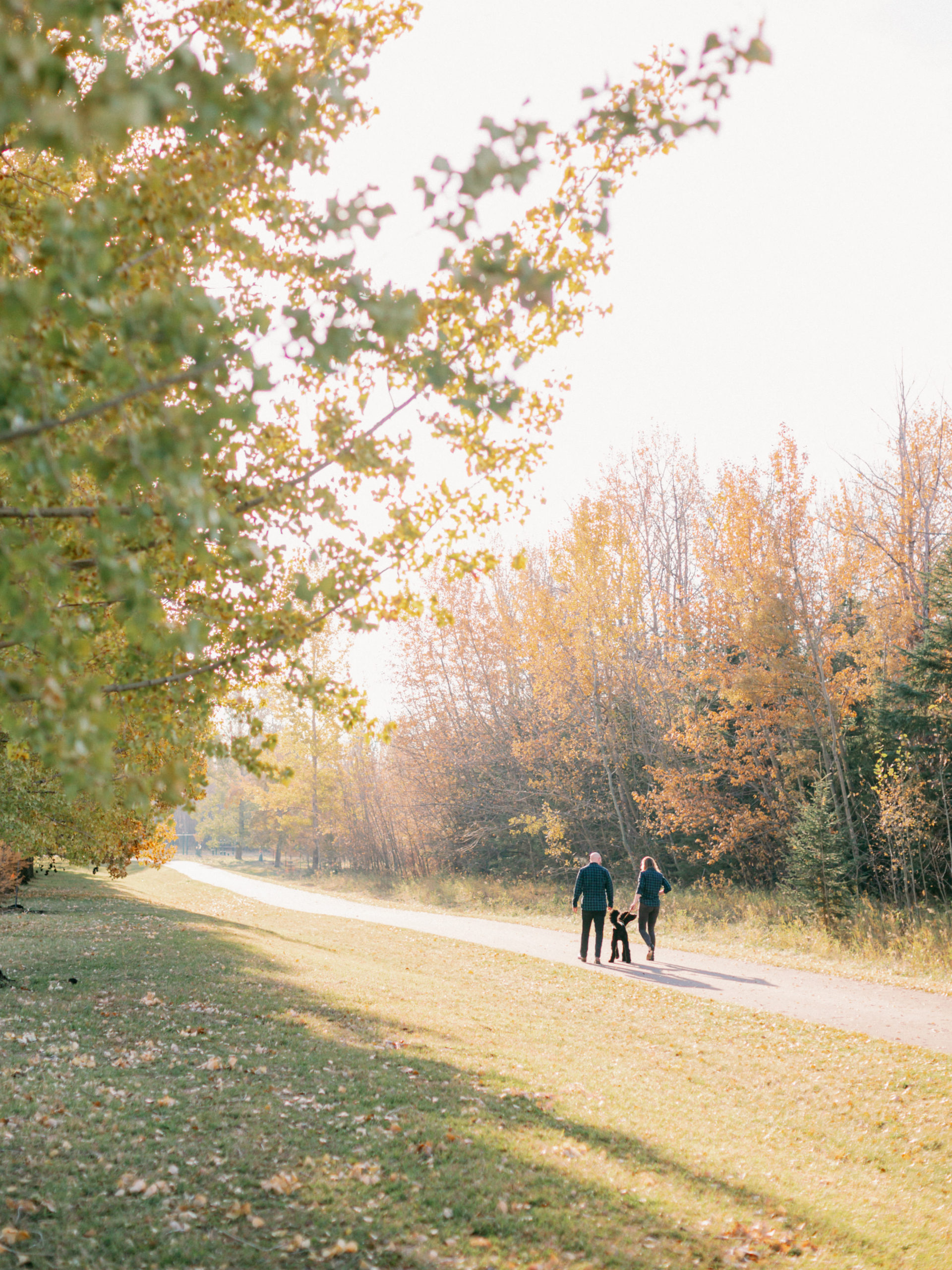 fall engagement photography with dogs in Edmonton